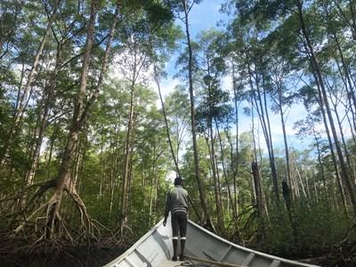TREE NATION - Pour reboiser le monde