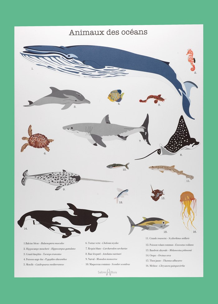 Affiche animaux A3 5