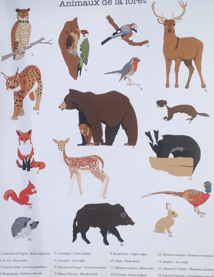 Affiche animaux A3 4