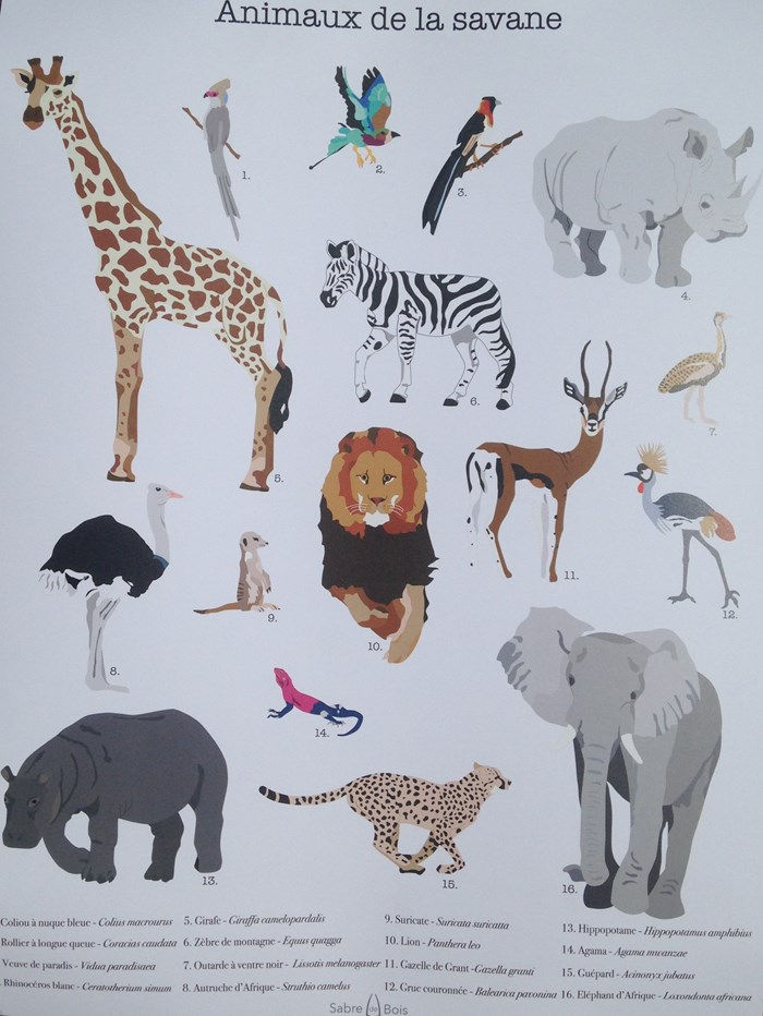 Affiche animaux A3 3