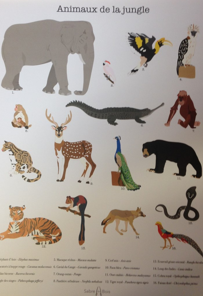 Affiche animaux A3 2