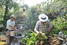Association So Food Organic Food