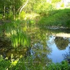 Le Jardin Naturel Pierre Emmanuel Un Jardin Secret Dans Le 20eme